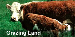 grazingland